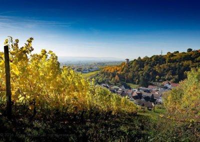 Herbstwanderung im Weinberg